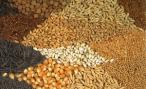 В Зауралье построят и модернизируют семенные заводы в ближайшие 5 лет