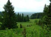 В Перми скоро появиться «Зеленый каркас»