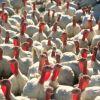В Ингушетии начали строить новый птицекомплекс
