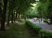 Парки в Подмосковье будут создавать по новым стандартам